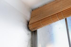 Inspection en bâtiment pour vérifier l'humidité